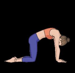 digestion yoga pose  yoga for you